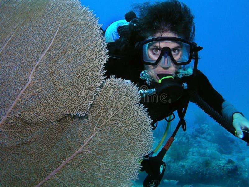 Zambullidor de equipo de submarinismo por el coral del ventilador fotografía de archivo libre de regalías