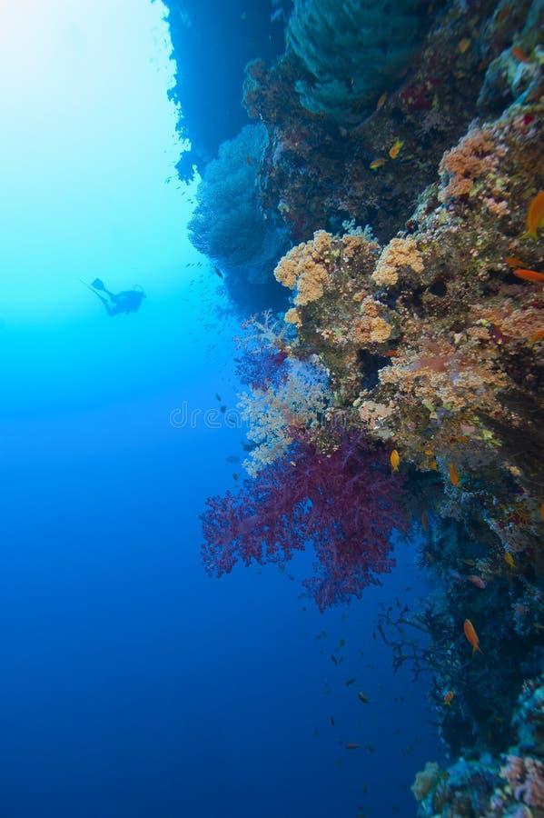 Zambullidor de equipo de submarinismo que explora un filón coralino tropical imagenes de archivo