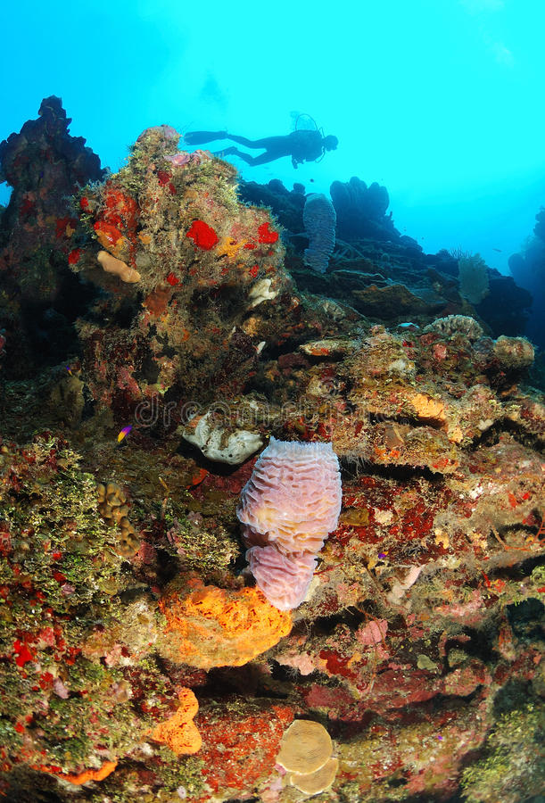 Zambullidor de equipo de submarinismo y filón coralino fotografía de archivo