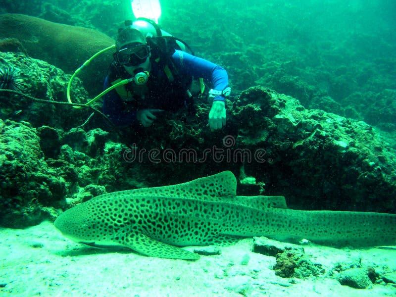 Zambullidor de equipo de submarinismo y tiburón, Tailandia imagen de archivo