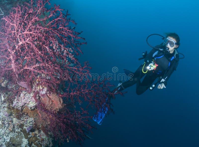 Zambullidor de EQUIPO DE SUBMARINISMO y ventilador de mar púrpura foto de archivo libre de regalías