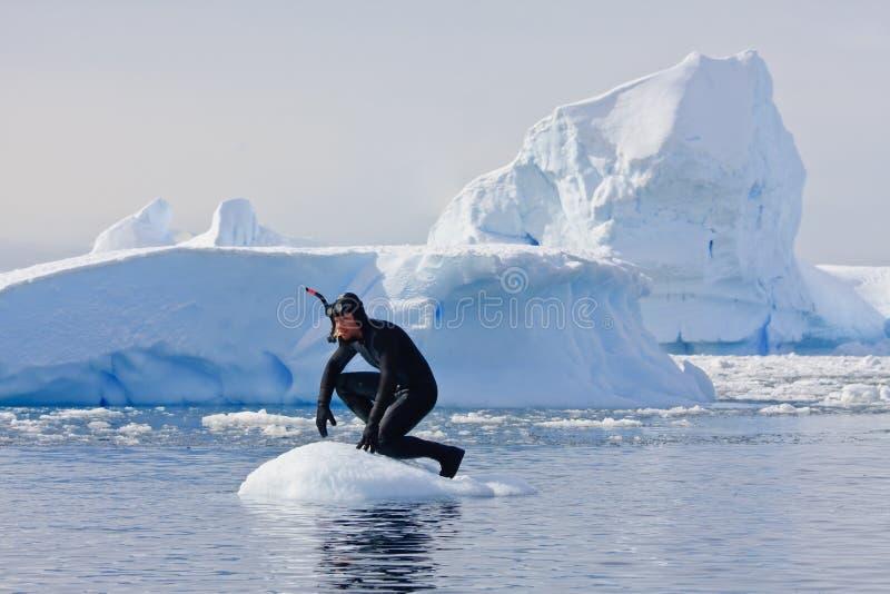 Zambullidor en el hielo fotografía de archivo