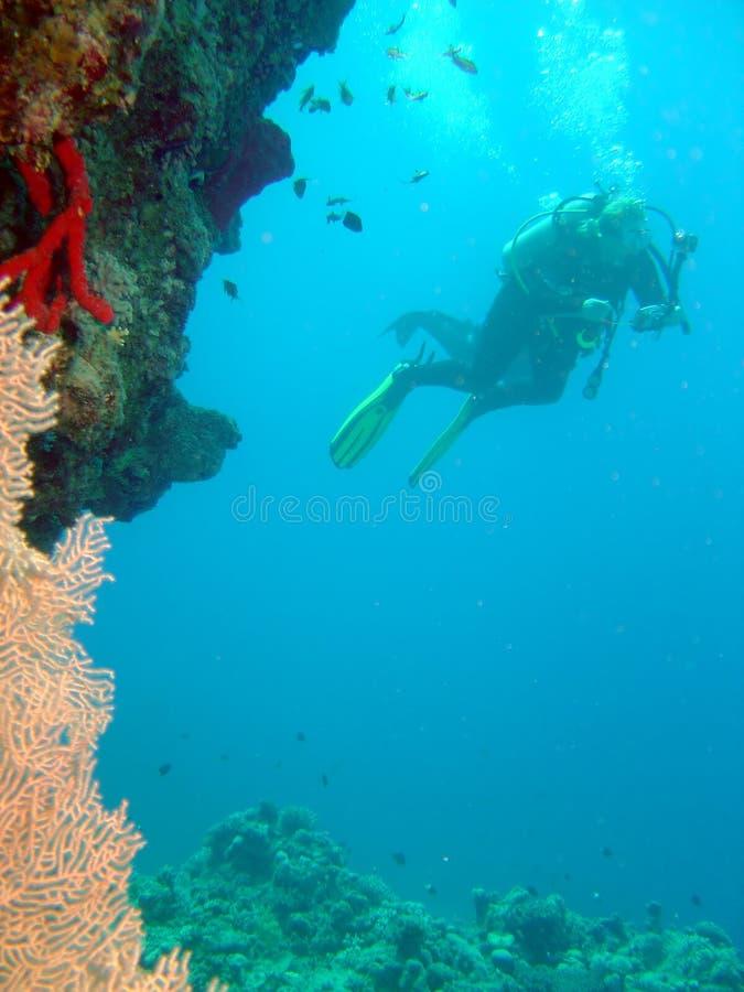 Zambullidor y coral fotografía de archivo libre de regalías