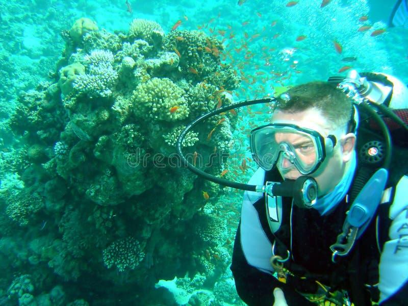 Zambullidor y coral foto de archivo libre de regalías