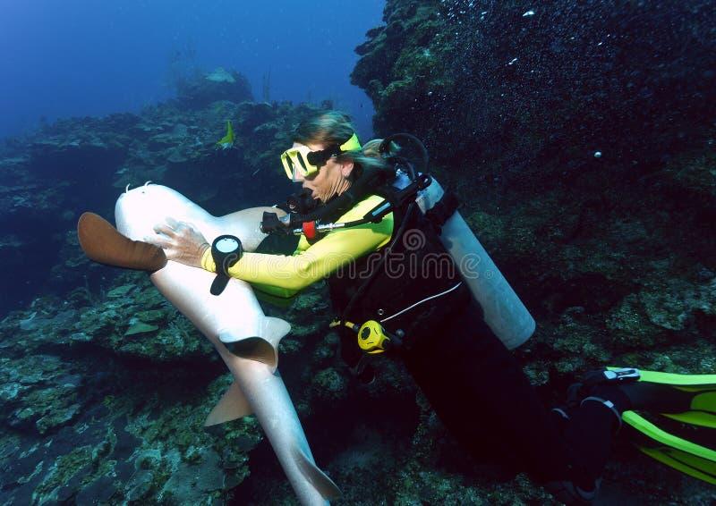 Zambullidor y tiburón foto de archivo