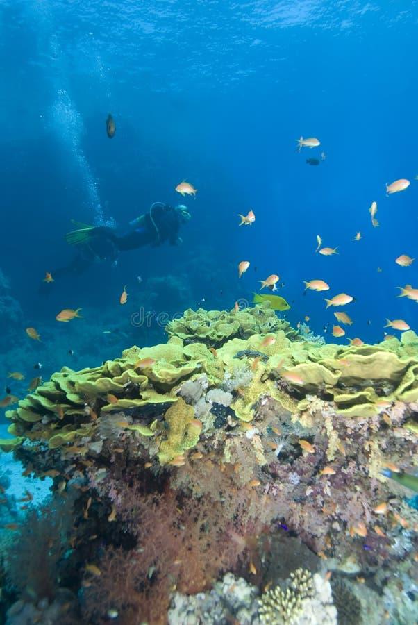 Zambullidores de equipo de submarinismo en agua cristalina imágenes de archivo libres de regalías