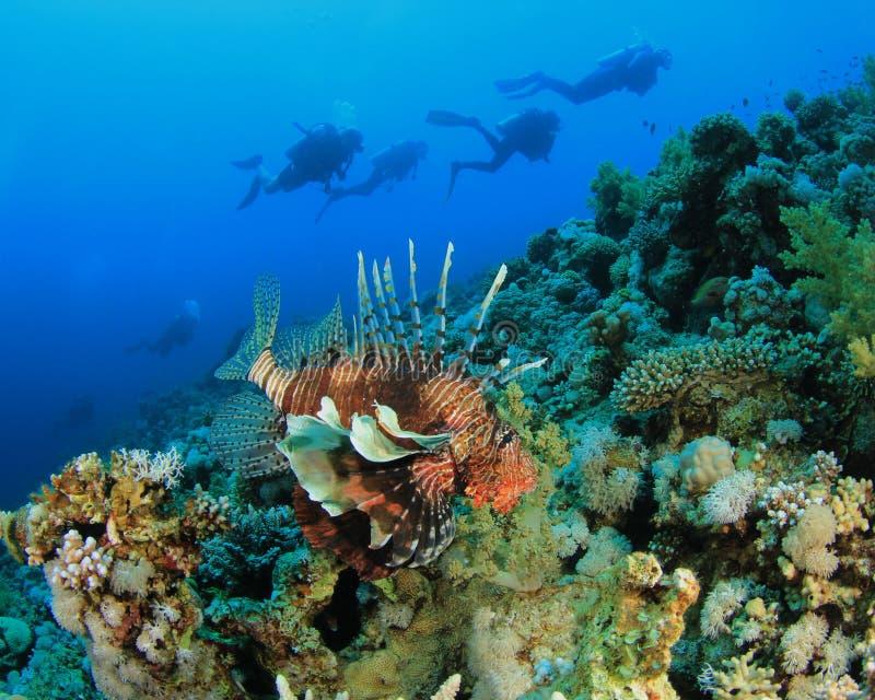 Zambullidores del Lionfish y de equipo de submarinismo fotos de archivo libres de regalías