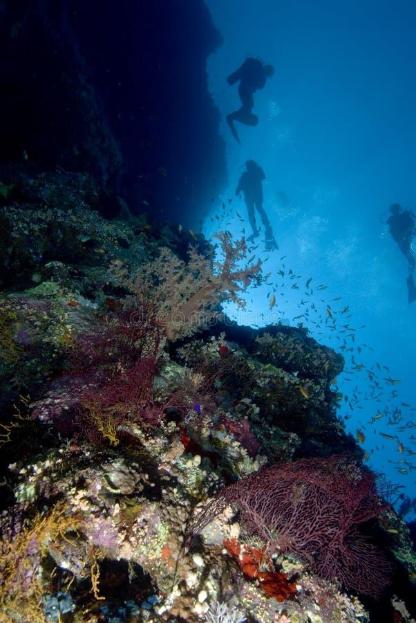 Zambullidores y filón coralino foto de archivo