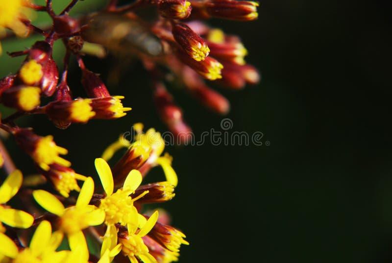 zamknięci kwiaty up kolor żółty zdjęcie royalty free