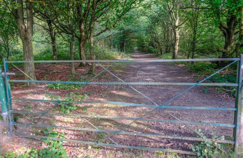 Zamknięta metal brama blokuje wejście lasowy spacer w obraz royalty free