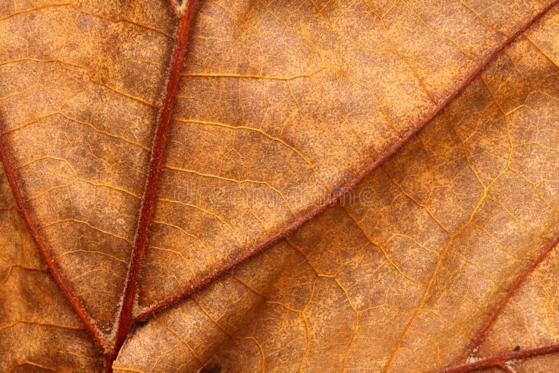 zamkniętego liść makro- tekstura w górę żył obrazy stock