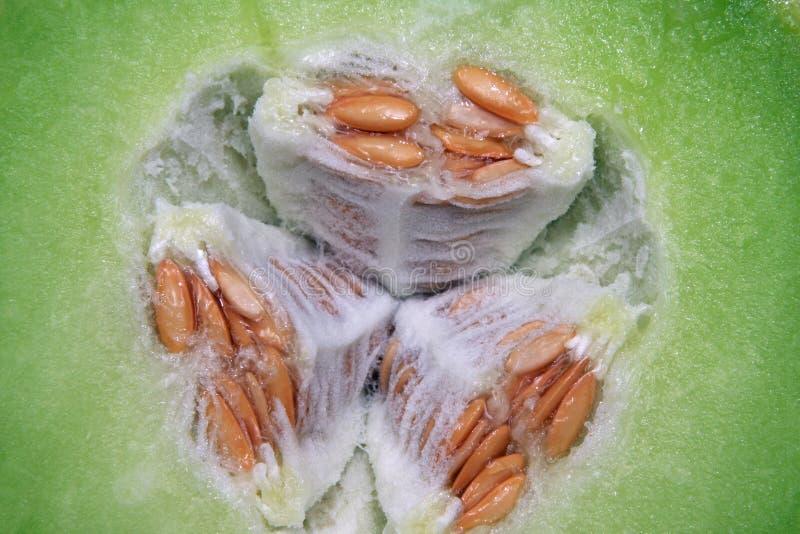 zamkniętej rosy miodowy melon miodowy zdjęcie stock
