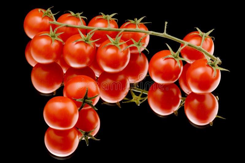 zamknięty dojrzały pomidor dojrzały fotografia royalty free