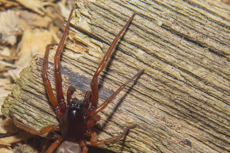 zamknięty pająk Nauka pająki Strach pająki zdjęcia royalty free