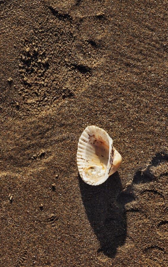 zamknięty piaska zamknięty seashell zdjęcie royalty free