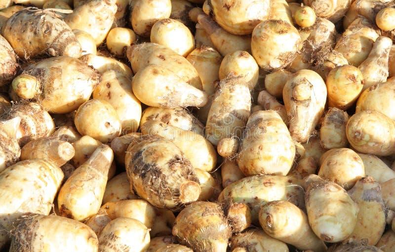 zamknięty taro warzywa widok zdjęcie stock