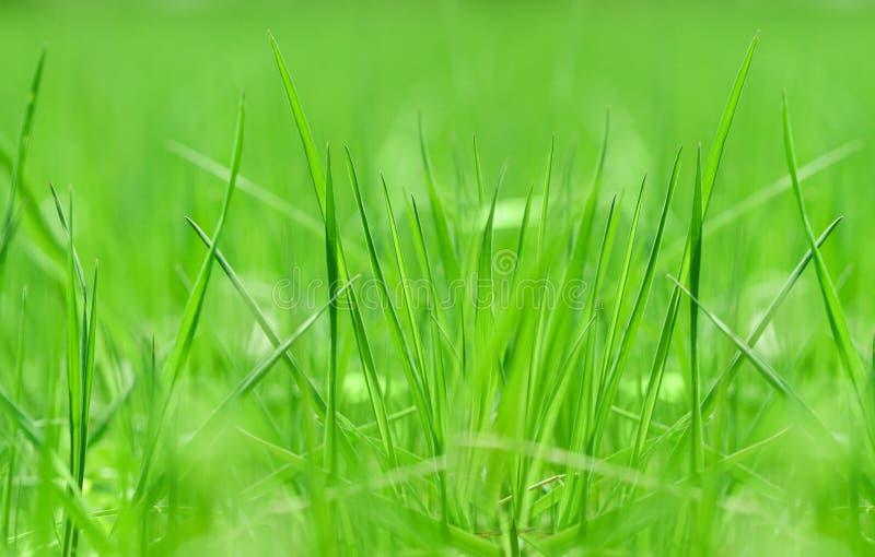 zamknięty trawy zamknięta fotografia fotografia stock