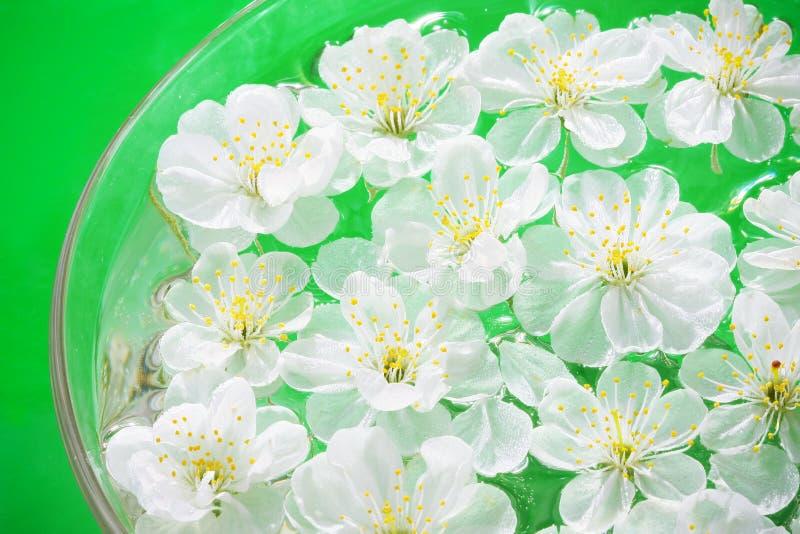 zamknięty zamknięci wiśnia kwiaty zdjęcia royalty free