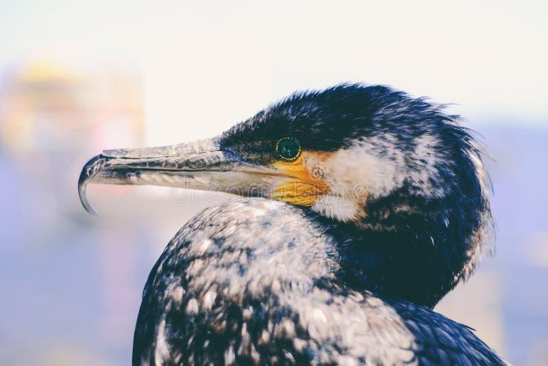 Zamknięty zbliżenie ptaki obrazy royalty free