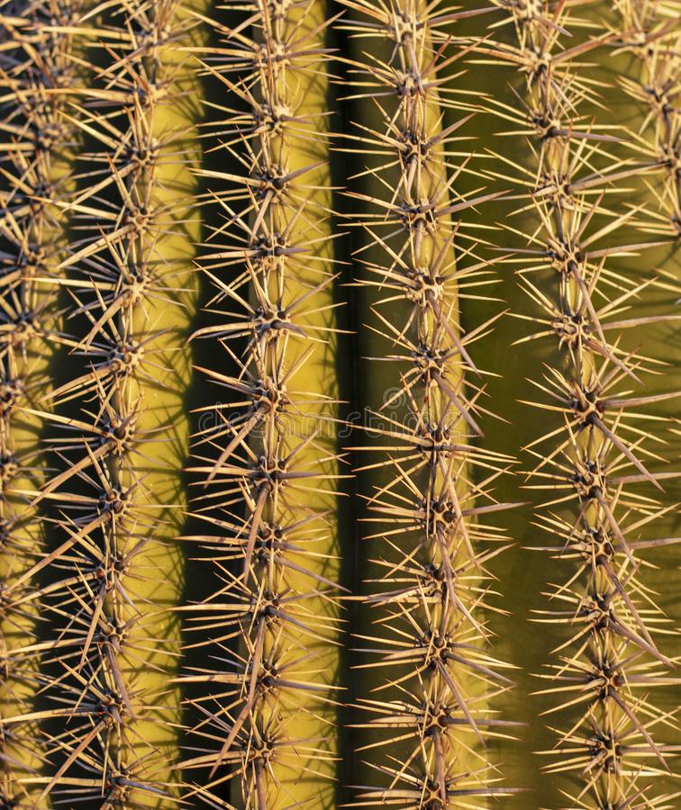 zamkni?ty zamkni?ci kaktus?w kr?gos?upy zdjęcia royalty free