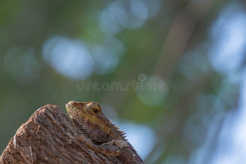 Zamknij zdjęcie części zmiennej jaszczurki na drzewie fotografia stock