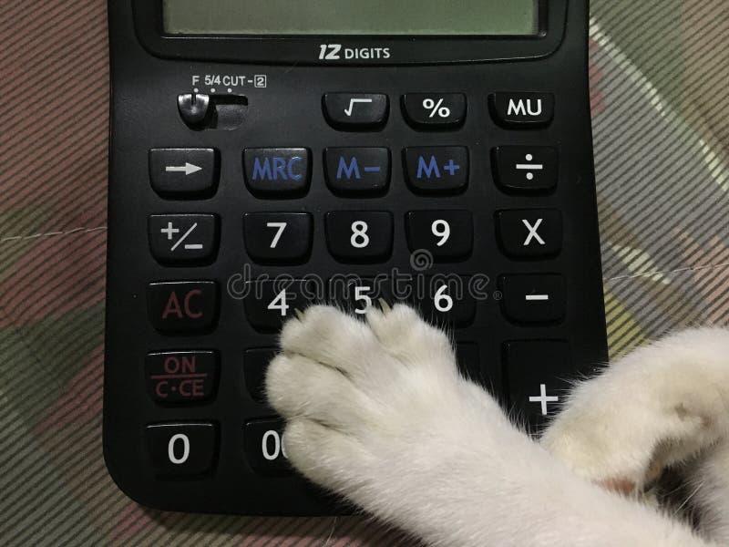 Zampa bianca ed artiglio del gatto messi sul calcolatore nero fotografia stock