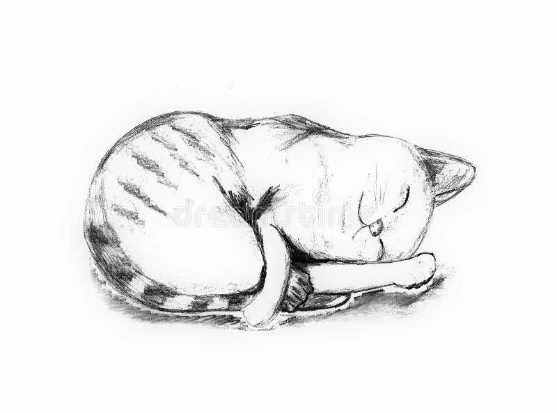 Zampa della tenuta del gatto di sonno con il fronte sveglio fotografia stock
