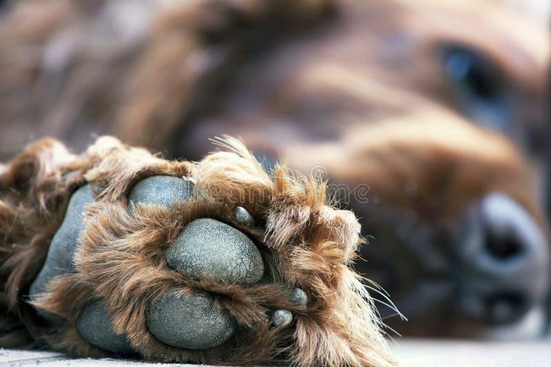 Download Zampa sveglia del cane fotografia stock. Immagine di fine - 56882666