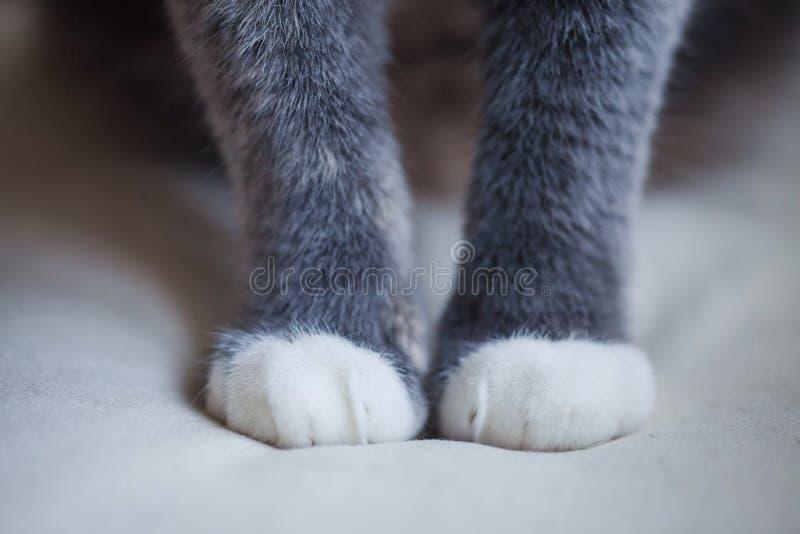 zampe s del gatto fotografie stock