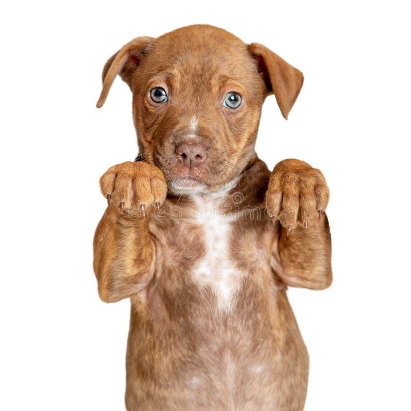 Zampe sveglie del cucciolo su per tenere il primo piano del prodotto immagini stock