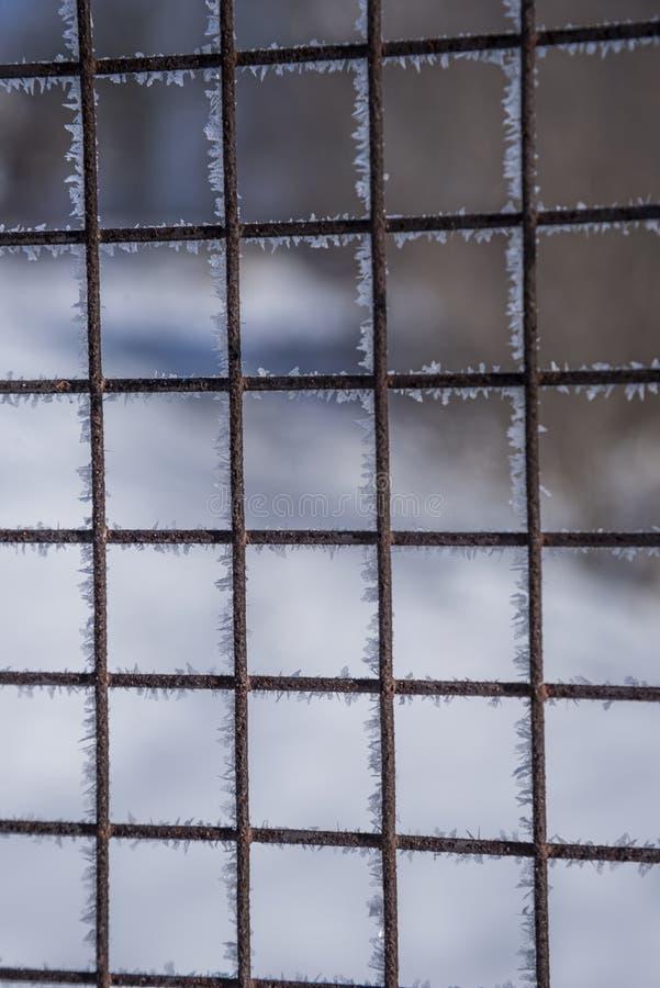 Zamrożony metalowy płot pokryty mrozem w mętnym zimowym dniu. Fokus miękki obrazy royalty free