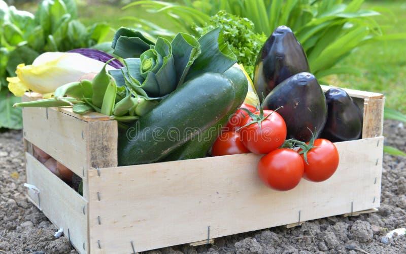 Zamyka na świeżych i kolorowych warzywach w skrzynce fotografia stock