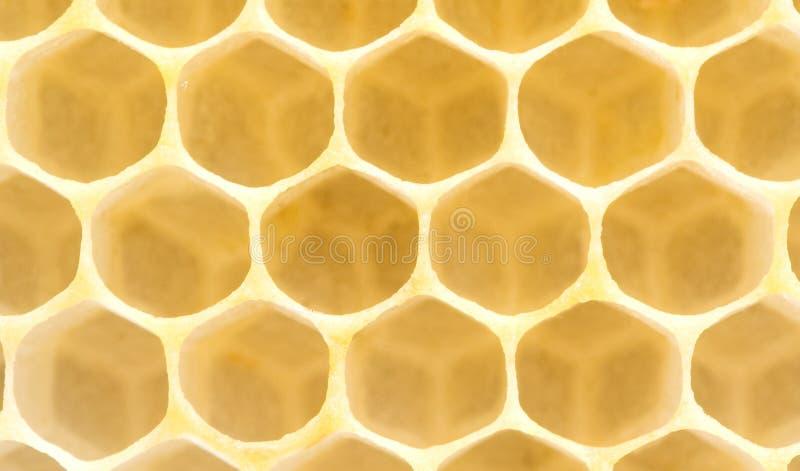 zamyka niezwykle honeycomb niezwykle zdjęcie royalty free