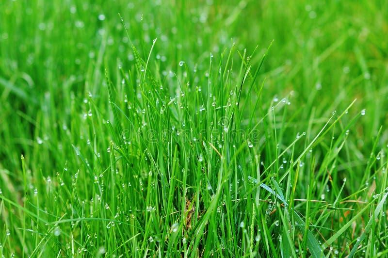 zamyka trawy zieleni macro zieleń zdjęcie stock
