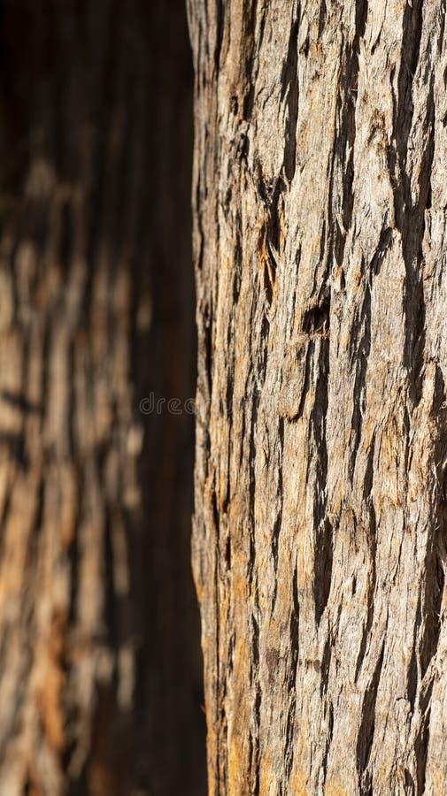 Zamyka up drzewny bagażnik i swój textured barkentyna obraz royalty free