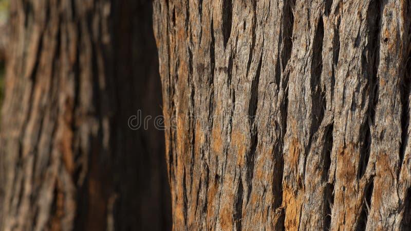 Zamyka up drzewny bagażnik i swój textured barkentyna zdjęcie stock