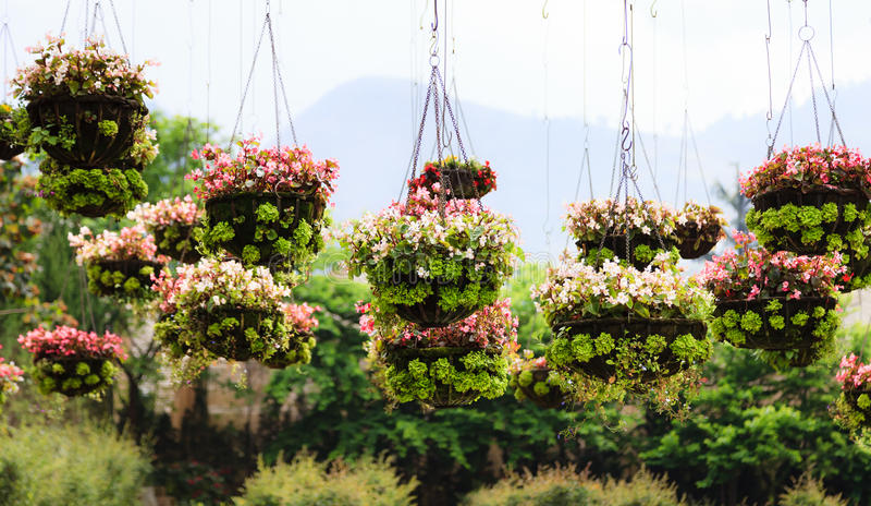 Flowerpots w parku zdjęcie stock