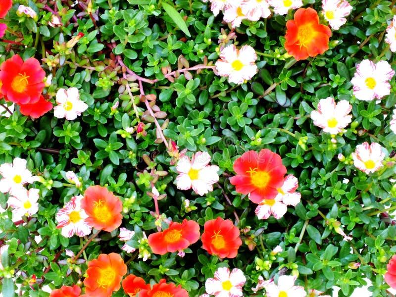Zamyka up kolorowy kwiat natury tło zdjęcie royalty free