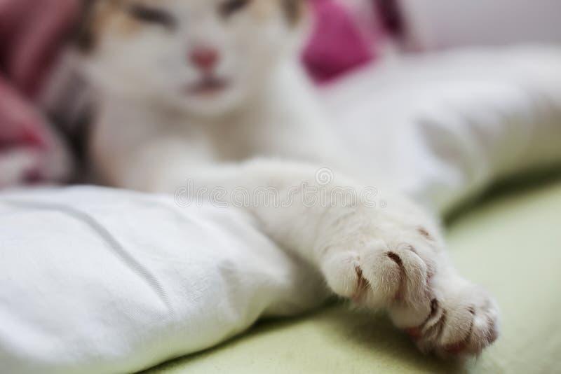 Zamyka up kota ` s łapa, kopii przestrzeń obraz royalty free