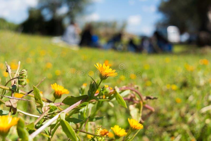 Zamyka Up Kwitnąca łąka na plamy Rodzinnym Nic tle wewnątrz zdjęcie royalty free
