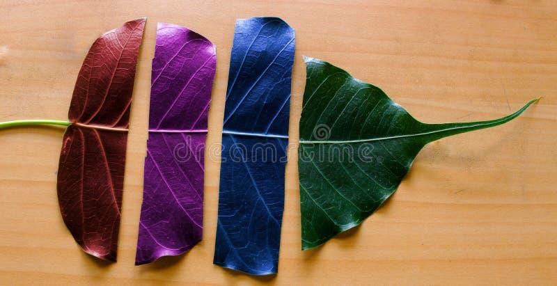 Zamyka up liść drzejący w cztery częściach z różnymi kolorami obrazy stock
