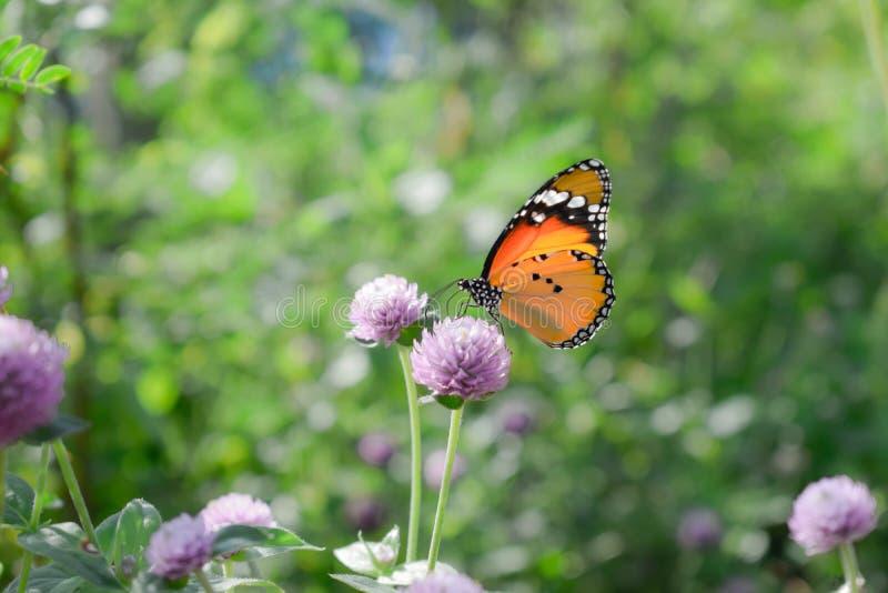 Zamyka up motyl na kwiacie zdjęcia stock