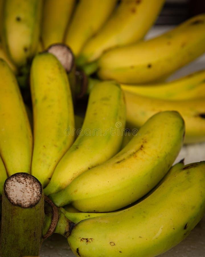 Zamyka up na Mini bananach w Wietnam zdjęcia stock