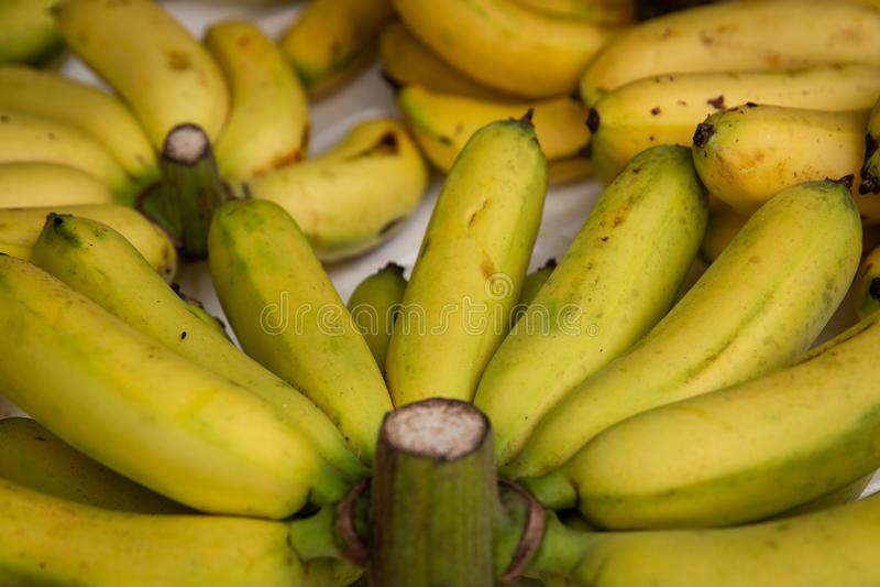 Zamyka up na Mini bananach w Wietnam zdjęcia royalty free