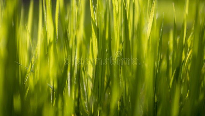 Zamyka up na rozmytej trawie z światła słonecznego dojechaniem zdjęcie royalty free