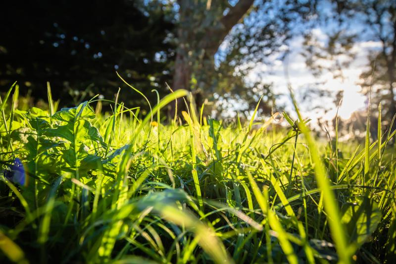 Zamyka up Piękna zielona łąka i drzewa z słońce plecy oświetleniem fotografia royalty free