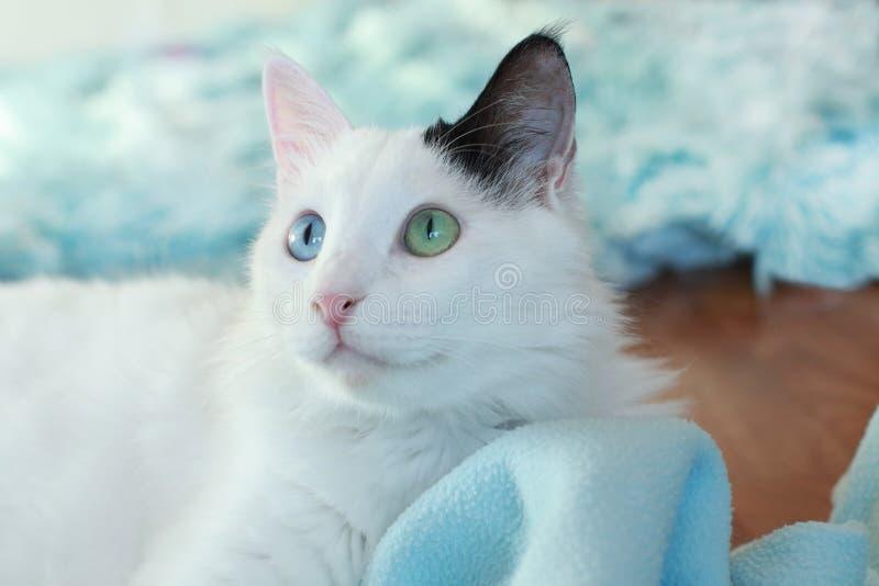 Zamyka up piękny dziwny przyglądający się kot zdjęcia stock