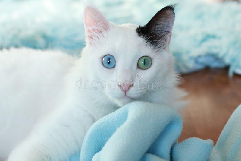 Zamyka up piękny dziwny przyglądający się kot obraz royalty free