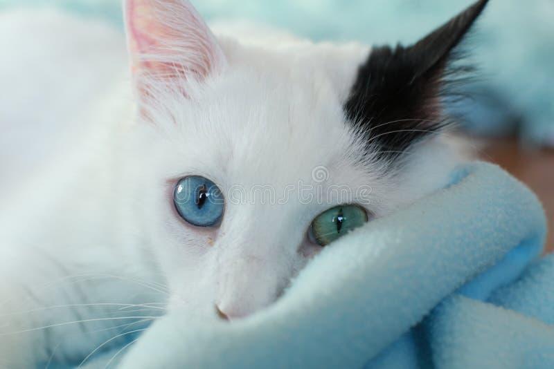 Zamyka up piękny dziwny przyglądający się kot zdjęcia royalty free
