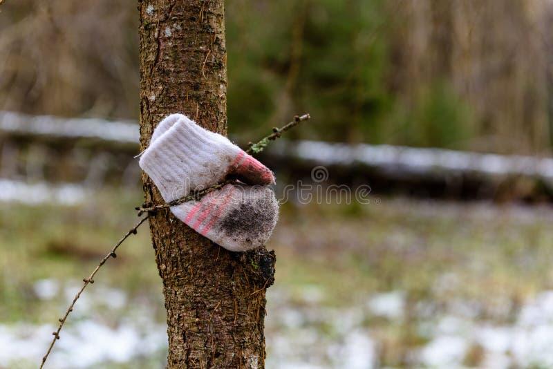 Zamyka up przegrana rękawiczka na kiju podczas opadu śniegu fotografia stock
